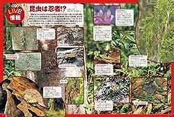 昆虫の、おもしろくて不思議な生態がいっぱい!