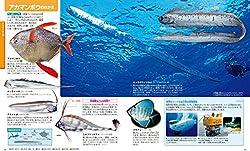 およそ5.5mの巨大深海魚・リュウグウノツカイ