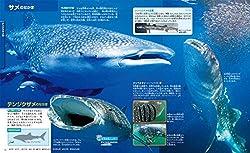 世界最大の魚類・ジンベエザメ!
