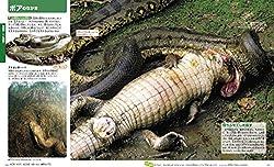 ワニを頭から飲み込む巨大なヘビ・アナコンダ