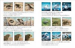生物たちの進化の様子が丁寧に描かれる(P18-19より)