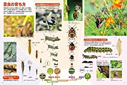 昆虫の体や進化に関する最新情報が満載の巻頭特集