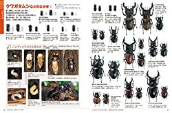 形が統一され整った標本、大きさが把握しやすい拡大率
