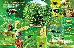 1本のコナラの木には、何匹の昆虫がいるのでしょう?