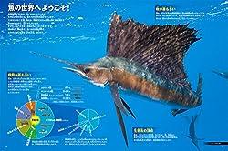 美しい写真で魚の世界に迫る!
