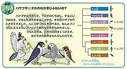 子ども向け鳥類図鑑初! 「最新DNA分析コラム」導入