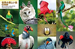 世界の美しい鳥たちを大きな写真で紹介!