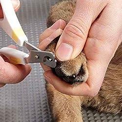 手の爪も切断場所がよく見えます