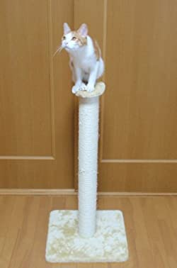 柱の上の見晴らし台も猫ちゃん大満足