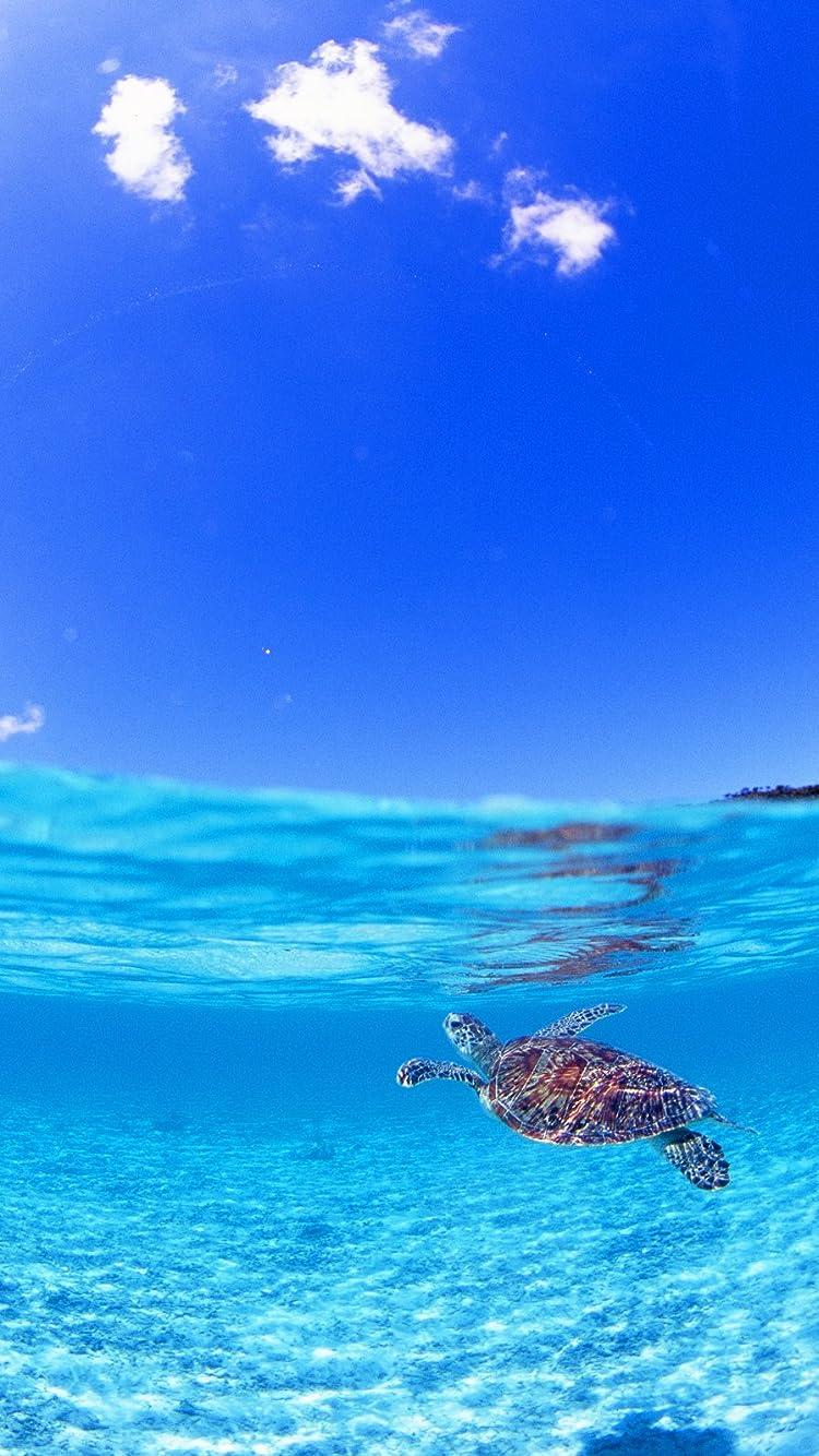 海の生き物 Iphone8 7 6s 6 750 1334 壁紙その他画像26530 スマポ