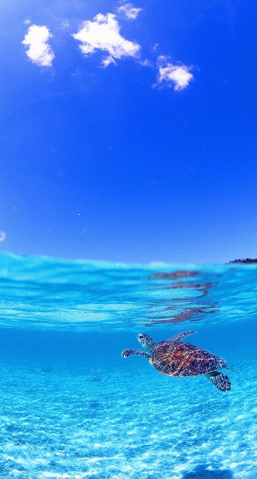 海の生き物 Iphone8 7 6s 6 壁紙 視差効果その他画像27189 スマポ