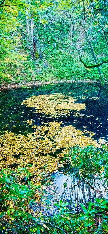 世界遺産  iPhone/Androidスマホ壁紙(1125×2436)-1 - 秋の白神山地 青池