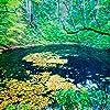 世界遺産 - 秋の白神山地 iPad壁紙 21971