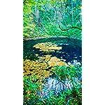 世界遺産 iPhone8,7,6 Plus 壁紙 拡大(1125×2001) 秋の白神山地 青池