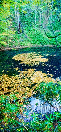 世界遺産の人気壁紙画像 秋の白神山地 青池