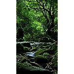 世界遺産 フルHD(1080×1920)スマホ壁紙/待受 屋久島 白谷雲水峡