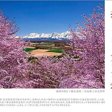 北海道 iPad壁紙 or ランドスケープ用スマホ壁紙(1:1)-1 - 満開の桜と十勝岳連峰