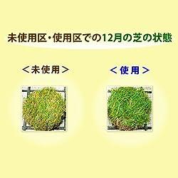 未使用区・使用区での12月の芝の状態