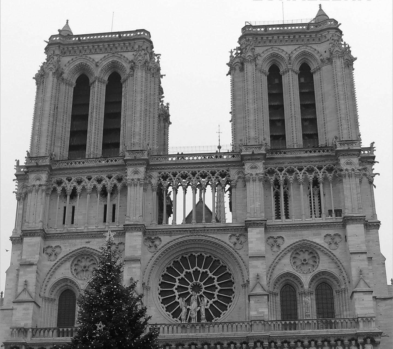 世界遺産 ノートルダム大聖堂 クリスマスツリー HD(1440×1280)スマホ 壁紙・待ち受け