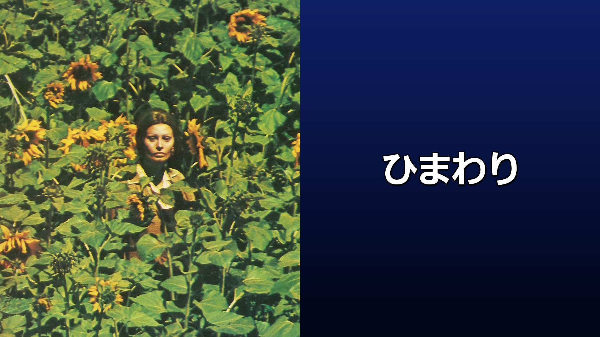 ひまわり (字幕版)