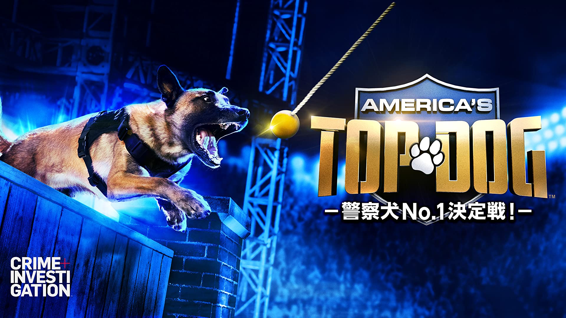 America's Top Dog -警察犬No.1決定戦!-
