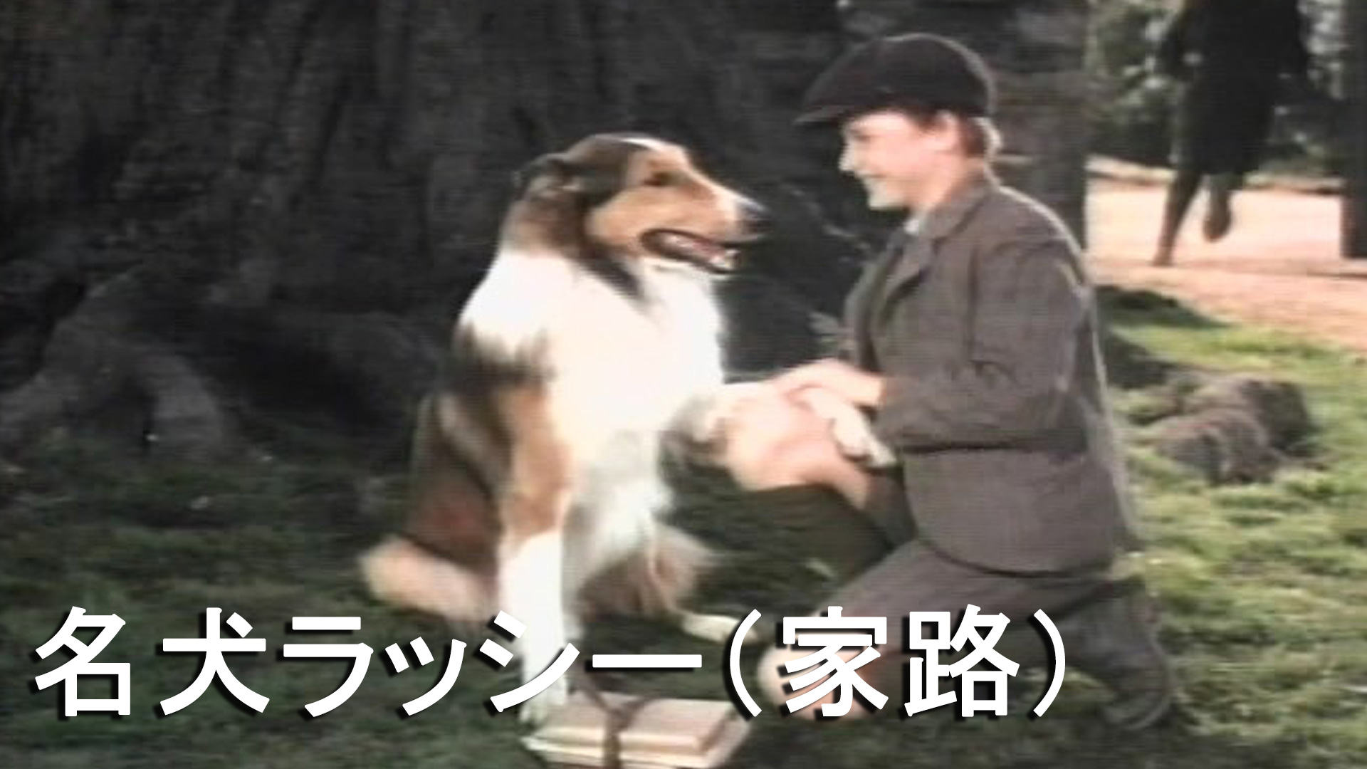 名犬ラッシー(家路)(字幕版)