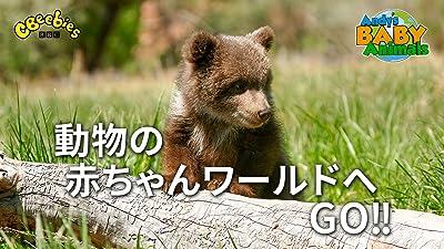動物の赤ちゃんワールドへGO!!(吹替版)