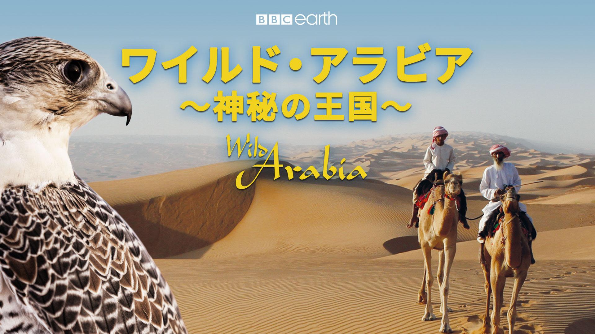 ワイルド・アラビア 神秘の王国(吹替版)