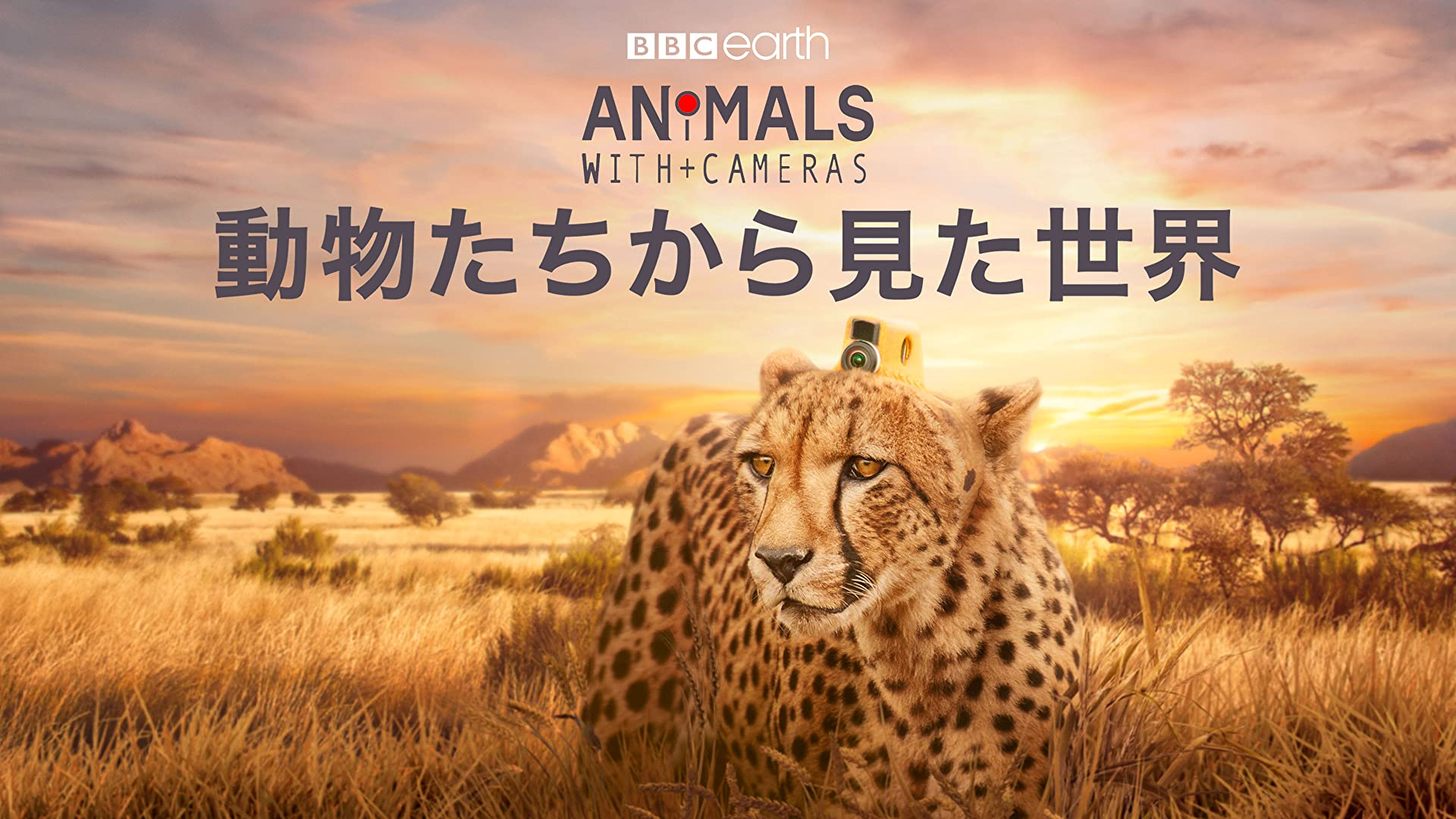 動物たちから見た世界(吹替版)