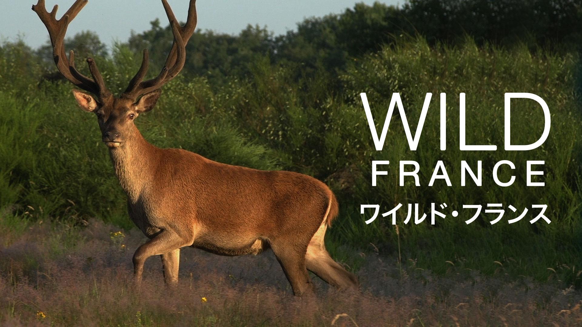 ワイルド・フランス(字幕版)