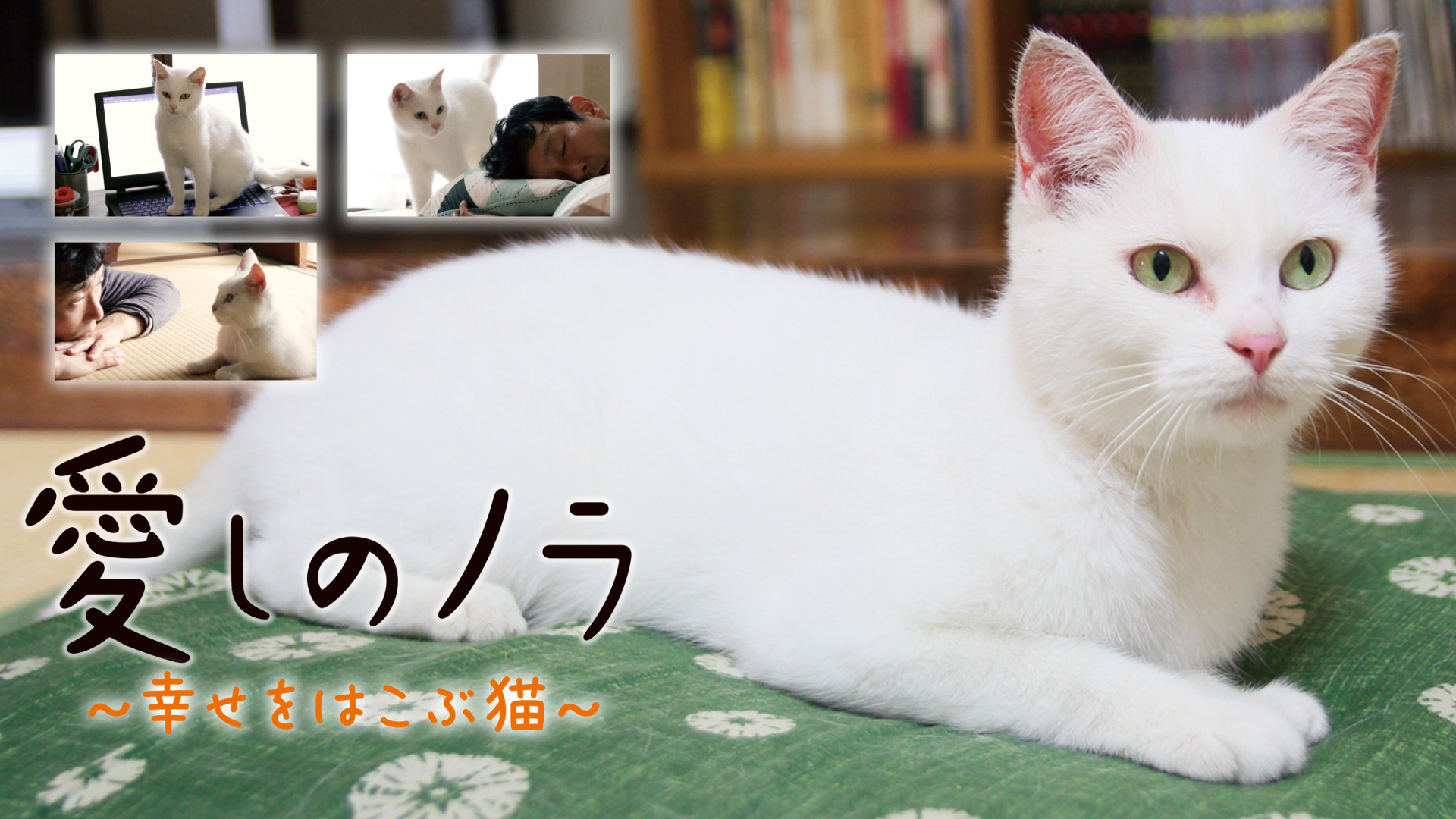 愛しのノラ 幸せをはこぶ猫